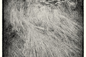 Bush and Grasses Death Valley