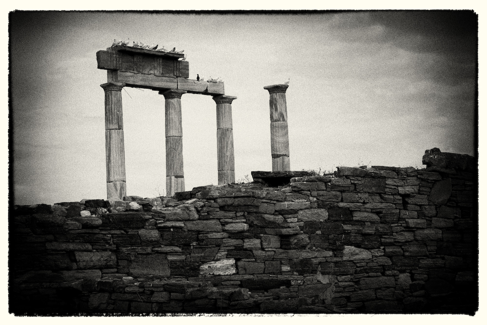 Delos- Greece Pillars and Birds