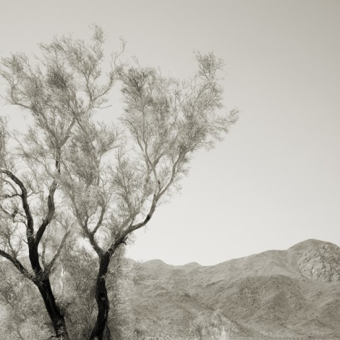Desert Tree and Mountain