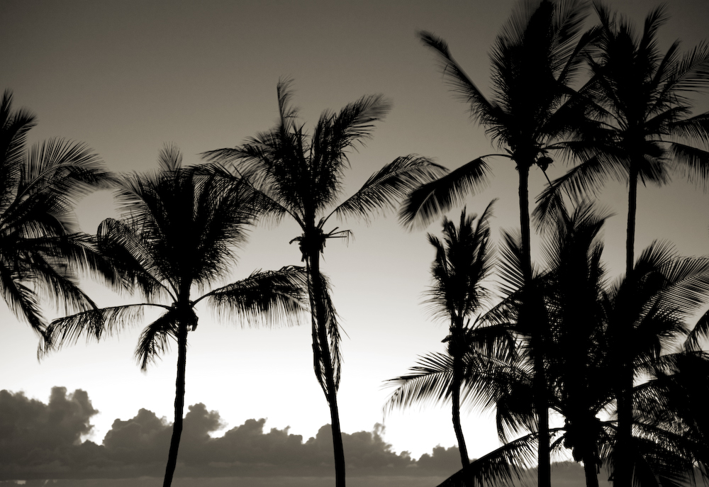 Night Palms III- Hawaii