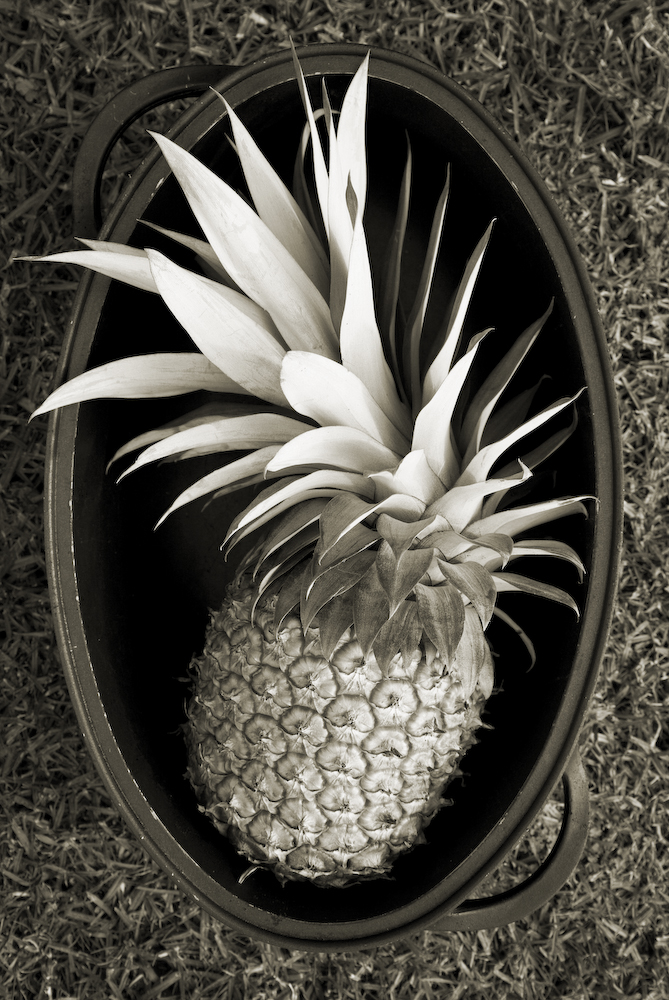 Pineapple in Pot- Hawaii