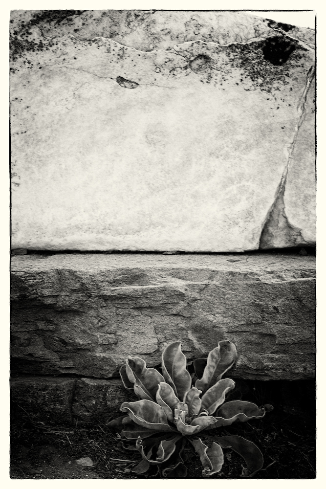 Plant and Rock- Delos- Greece