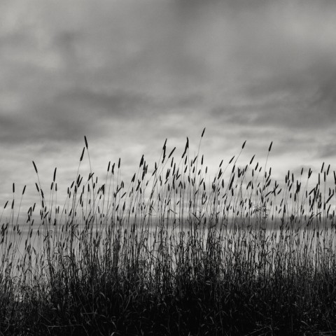 Reeds and Evening Sky- Big Sur