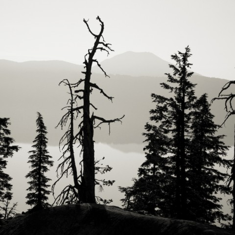 Tree Silhouette - Crater Lake