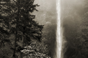Trees and Waterfall - Oregon