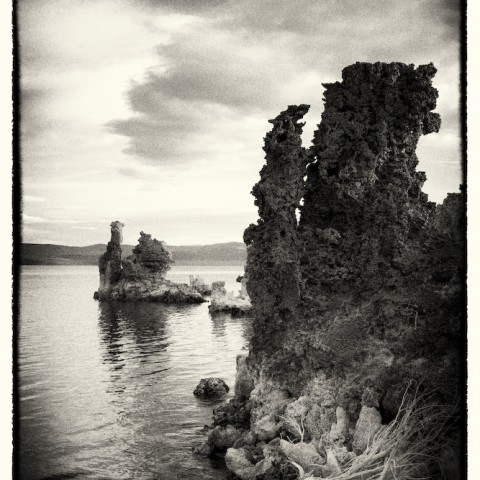 White Bush - Mono Lake