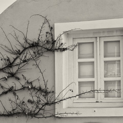 Window and Vine- Santorini